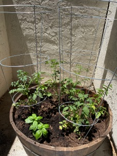 My new tomato planter